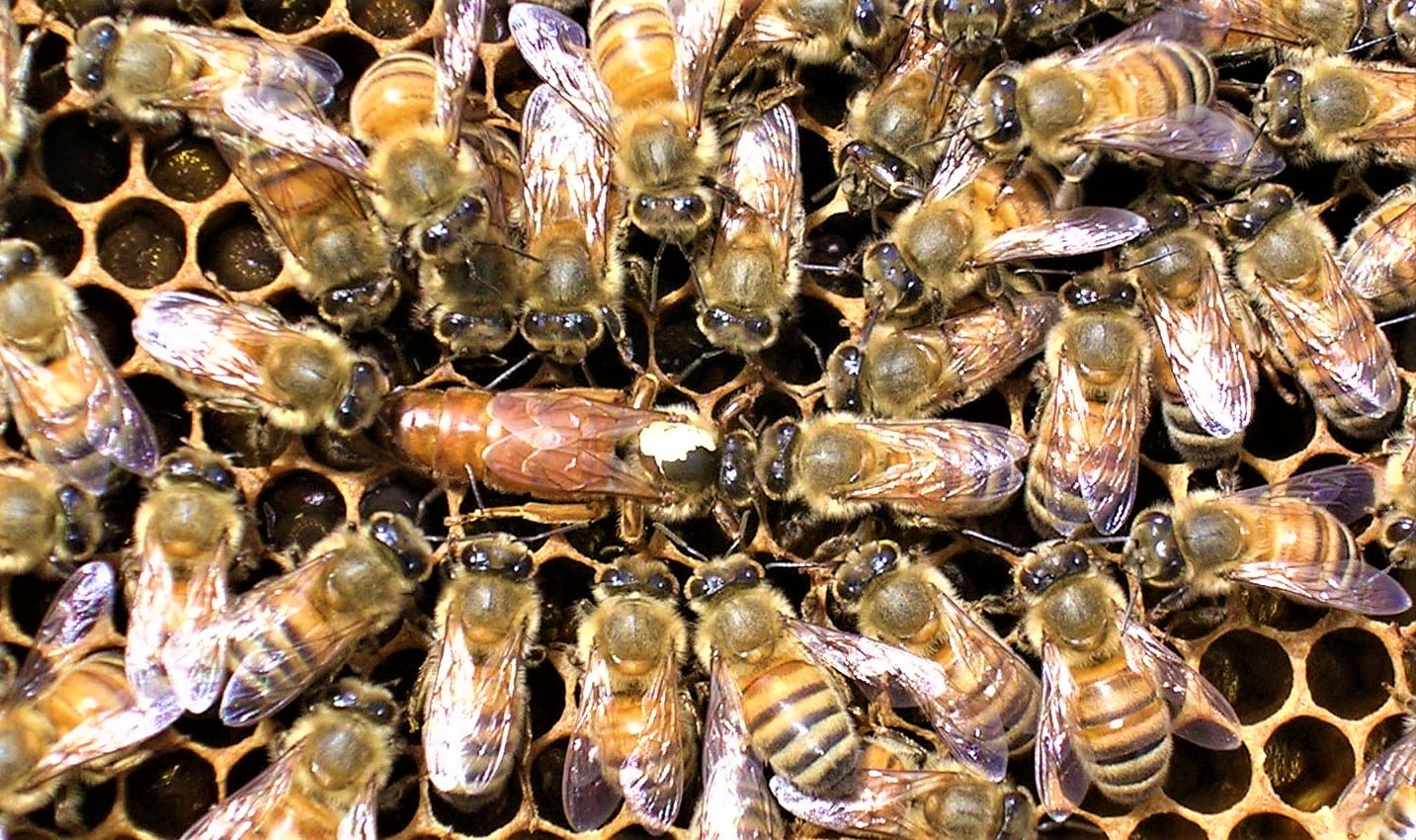 4ce0a607-110d-4132-9957-7cbcadab38cfhoney bee for BOTTOM of Chem. Free page